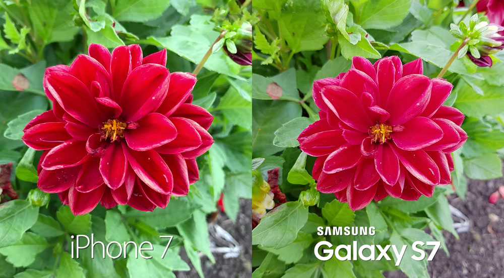 iPhone 7 vs Samsung Galaxy S7: comparison of the quality of the shot